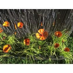 Fleur Pavot de Provençal