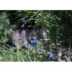 Tuteur 3 Papillons Provençal