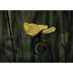 Tuteur Papillon Citron Provençal
