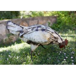 Poule Blanche qui Provençal