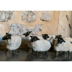 Mouton Blanc (Pierre Provençal
