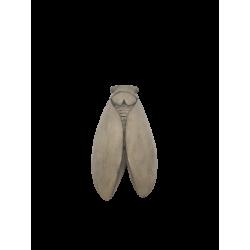 CIGALE 25cm GM (OMBRE)